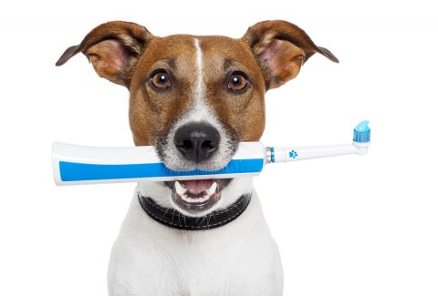 bigstock_Dog_With_Electric_Toothbrush_33478472.jpg